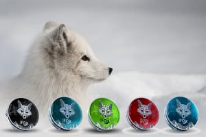 white fox nicotine pouches